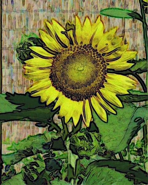 Photograph - Sunflower Face by Alec Drake