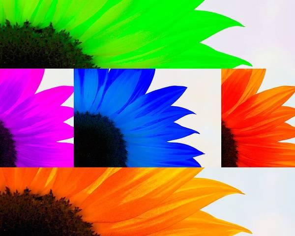 Sunflower Interrupted Art Print