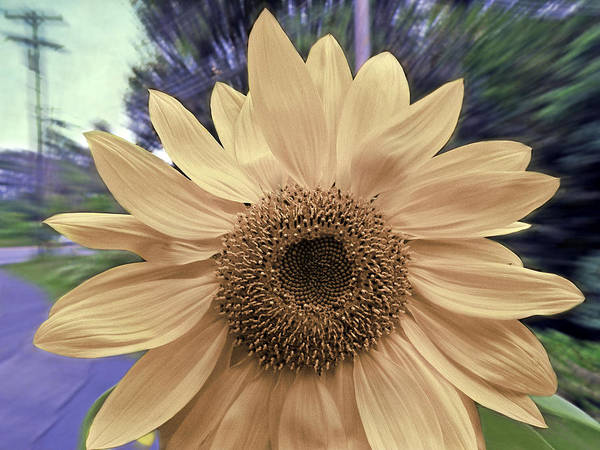 Subdivision Photograph - Sunflower Speed by Steven Michael