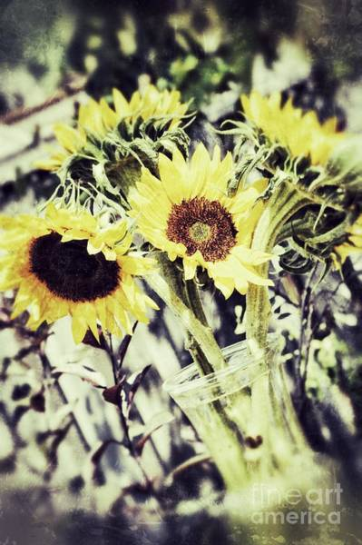 Photograph - Sunflowers 2 by Traci Cottingham