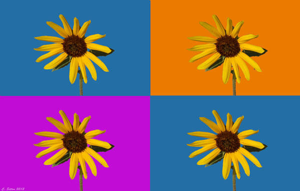 Photograph - Sunflowers by C Sitton