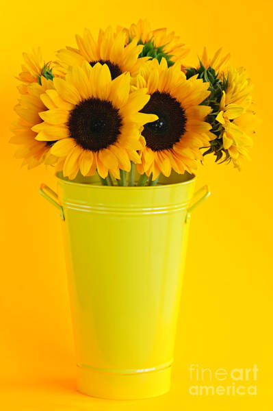 Wall Art - Photograph - Sunflowers In Vase by Elena Elisseeva