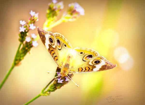 Photograph - Sunlit Beauty by Barry Jones
