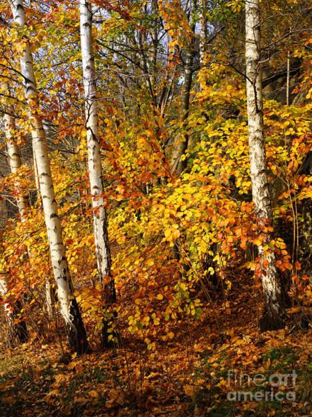Photograph - Sunny Fall Day by Lutz Baar