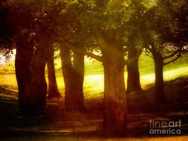 Photograph - Sunny Glade by Lutz Baar