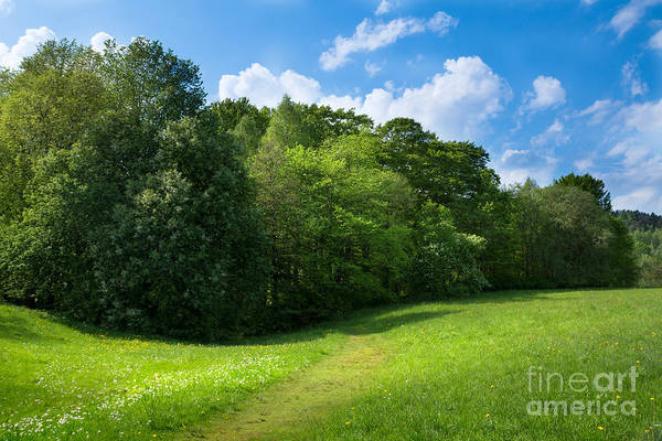 Photograph - Sunny Meadows by Lutz Baar