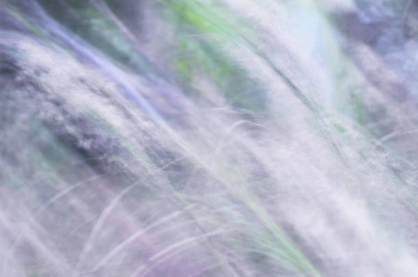 Photograph - Sunny Wind. The Music Of The Silver Grass. Impressionism. Tnm by Jenny Rainbow
