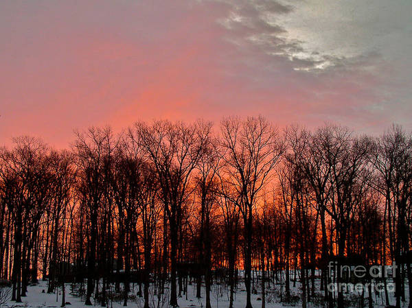 Photograph - Sunrise Behind The Trees by Mark Dodd