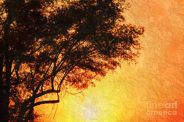 Photograph - Sunrise Silhouette by Andee Design
