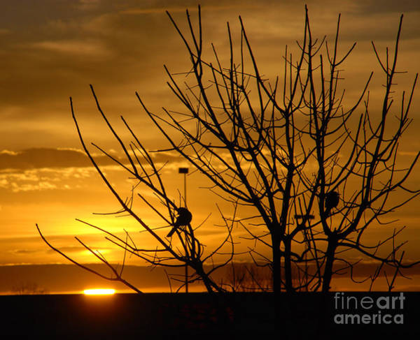 Morning Song Wall Art - Photograph - Sunrise Song by Susanne Van Hulst
