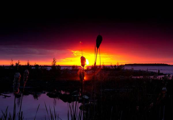 Lake Huron Photograph - Sunset Cat Tail by Cale Best