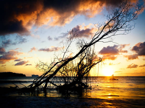 Photograph - Sunset Drift Wood 2 by Daniel Marcion