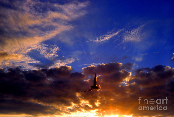 Photograph - Sunset Freedom by Thomas R Fletcher