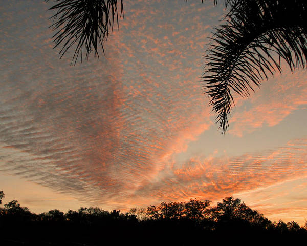 Photograph - Sunset In Lace by Peg Urban