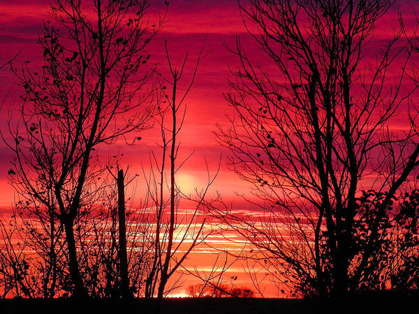 Christy Photograph - Sunset In Purple And Pink by Christy Patino