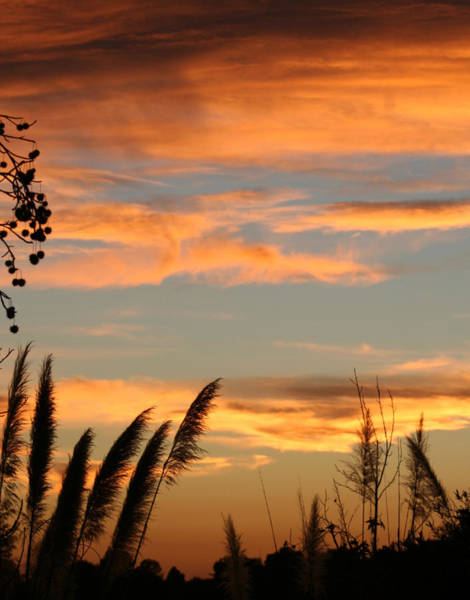 Photograph - Sunset In The Milk Weeds by Jeremy McKay