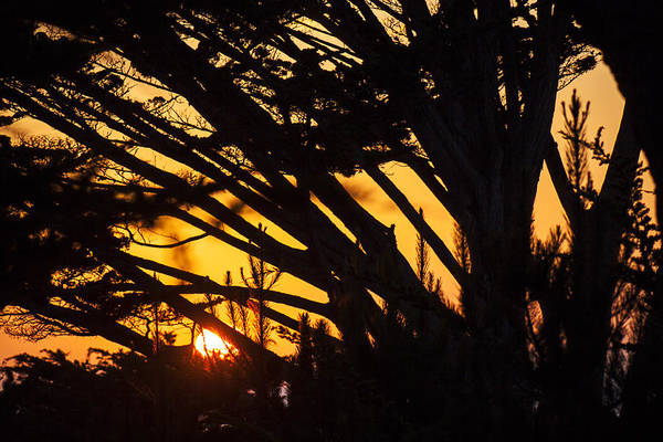 Photograph - Sunset In The Trees by Garry Gay