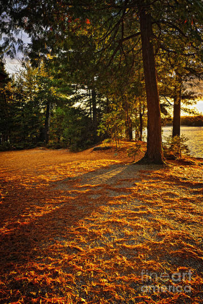 Evergreen Trees Photograph - Sunset In Woods At Lake Shore by Elena Elisseeva