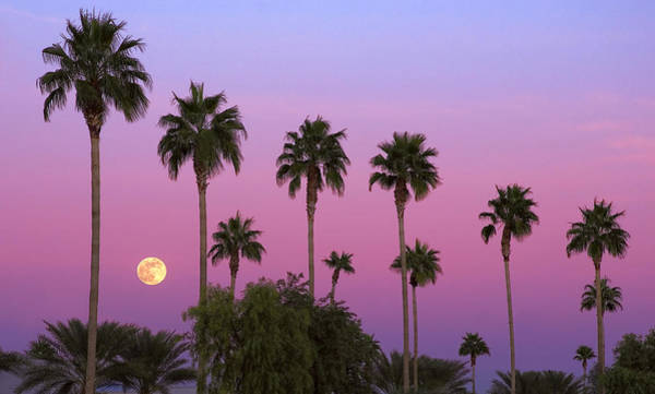 Photograph - Sunset Moon by Dave Dilli
