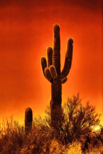 Digital Art - Sunset Silhouette by Rick Wicker