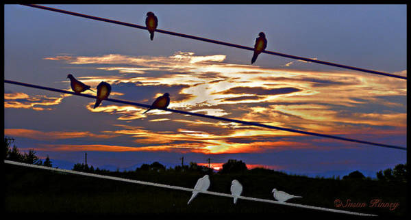 Digital Art - Sunsets And Birds by Susan Kinney