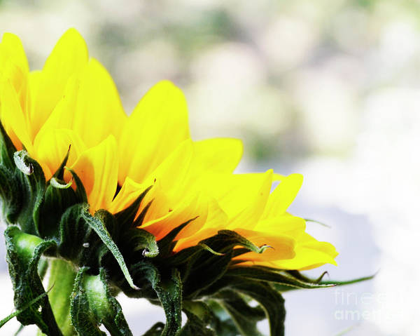 Photograph - Sunshine Almost Always Makes Me Happy by Traci Cottingham