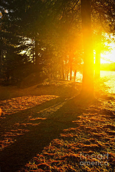 Wall Art - Photograph - Sunshine In Evening Forest Near Lake by Elena Elisseeva