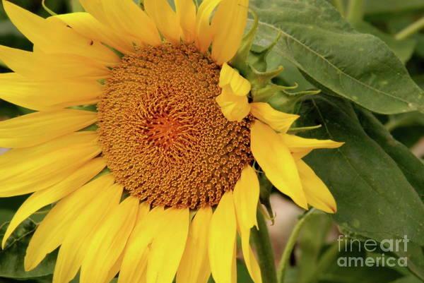 Photograph - Sunshine by Ken Williams