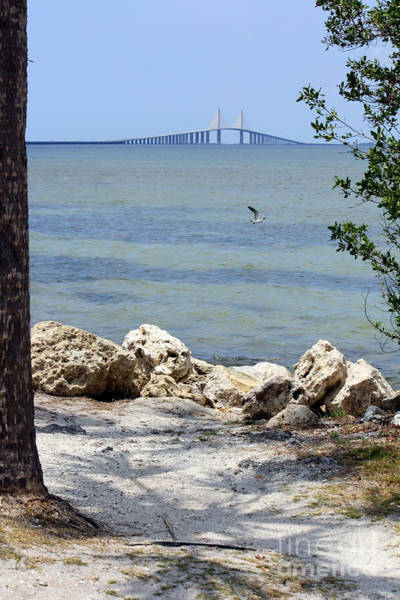 Photograph - Sunshine Skyway From The Causeway by Carol Groenen