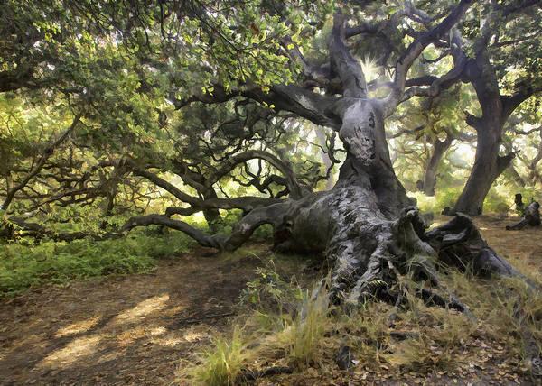 California Oak Digital Art - Sunstar Oak by Sharon Foster
