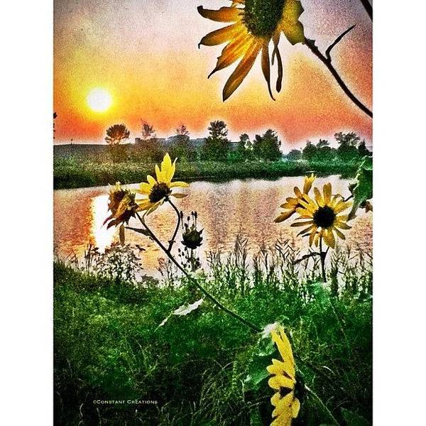 Creation Wall Art - Photograph - Suntrap (edit 2) by Constant Creations