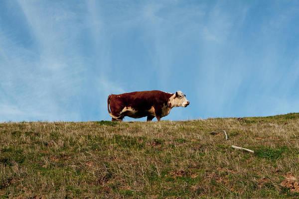Photograph - Super Bull by Lorraine Devon Wilke