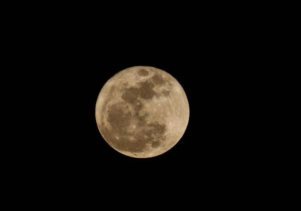 Photograph - Super Moon 2011 by Lara Ellis