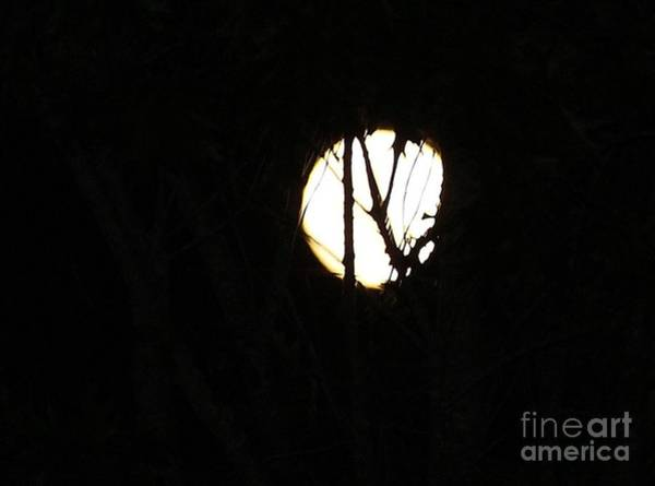 Wall Art - Photograph - Supermoon 2012 by Pauline Ross
