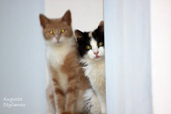 Photograph - Surprising  Cats by Augusta Stylianou