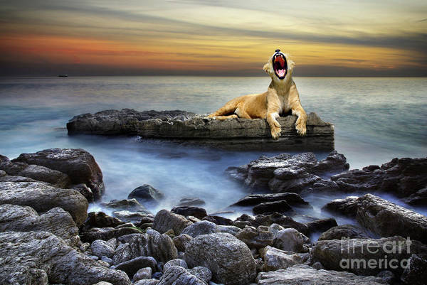 Yawn Photograph - Surreal Lioness by Carlos Caetano