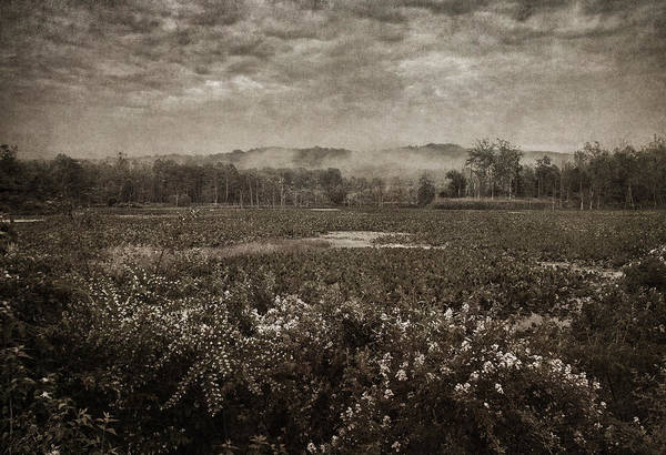Photograph - Suspended Over The Wetlands by Dale Kincaid