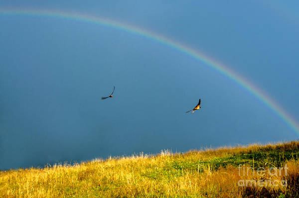 Photograph - Swallows Under A Rainbow by Thomas R Fletcher