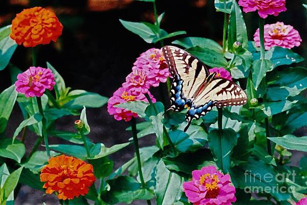 Photograph - Swallowtail Among The Zinnias by Byron Varvarigos