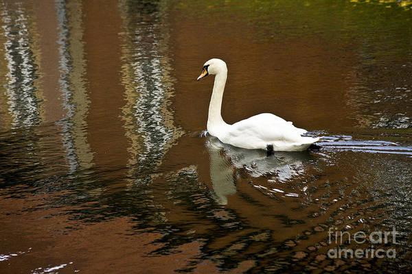Photograph - Swan Lake by Heiko Koehrer-Wagner