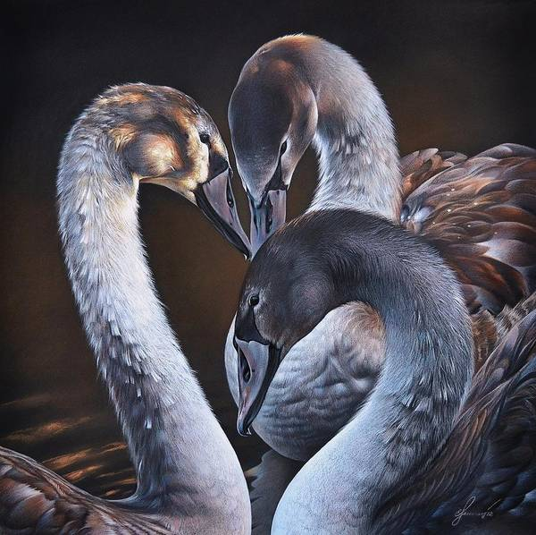 Drawing - Swan Whispers by Elena Kolotusha