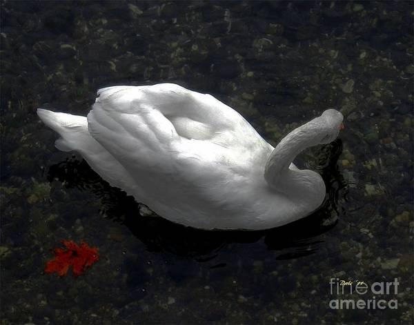 Digital Art - Swan With Leaf by Dale   Ford