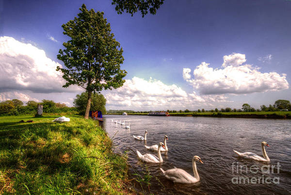 Swan Boats Photograph - Swanny River by Rob Hawkins