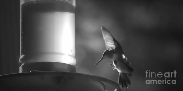 Nectar Mixed Media - Sweet Light by Kim Henderson