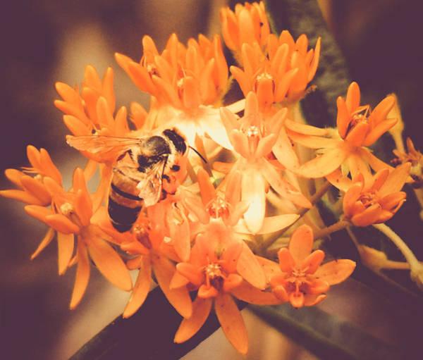 Nectar Mixed Media - Sweet Nectar by Connie Dye