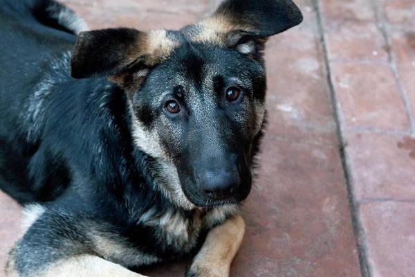 Photograph - Sweet Spanish Pup by Lorraine Devon Wilke
