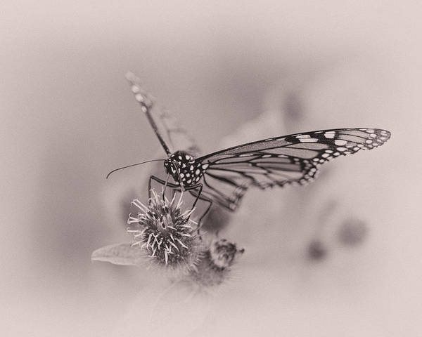 Nectar Photograph - Sweet Summertime by Susan Capuano