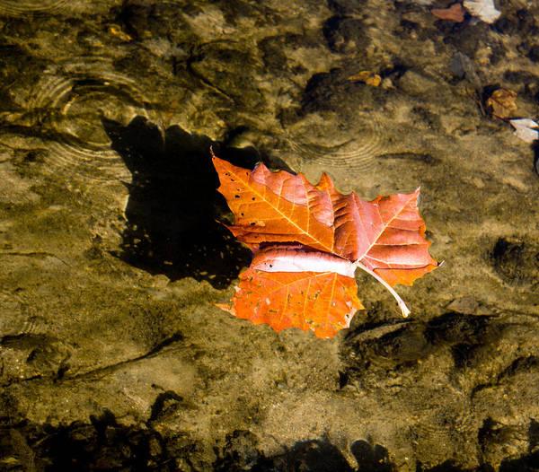 Wall Art - Photograph - Sycamore Leaf Autumn Shadow 2 by Heinz G Mielke