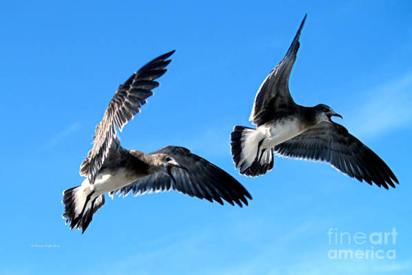 Photograph - Synchronized Flying by Patricia Griffin Brett
