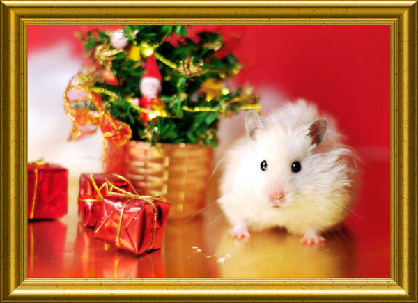 Golden Hamster Photograph - Syrian Hamster With Christmas Tree by Pyza / Puchikumo